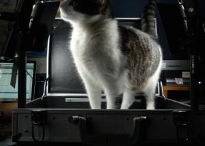Meine Katzen wollen natürlich immer alles inspizieren und immer mitmachen.